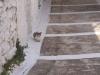 greece-summer2005-142